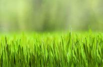 Tuinonderhoud in maart