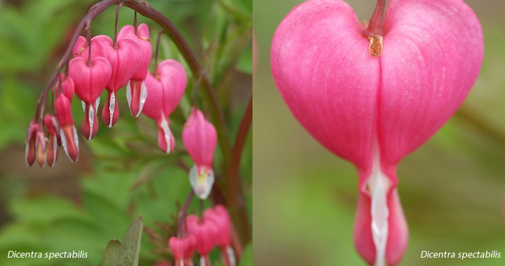 Vaste Planten Tuin : Lentekriebels met vaste planten hermans tuin en bestrating