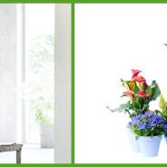 Binnenstebuiten-planten: woonplanten van de maand mei