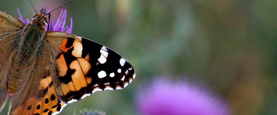 Gratis insectenboekje
